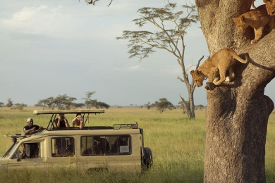 Adventure Camping Safari